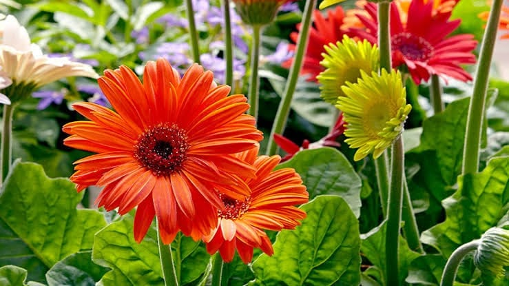 Floriculture Business In India 13