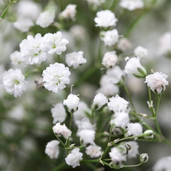 Floriculture Business In India 15