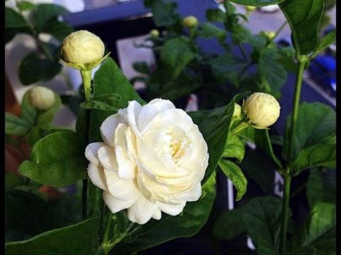 Floriculture Business In India 17