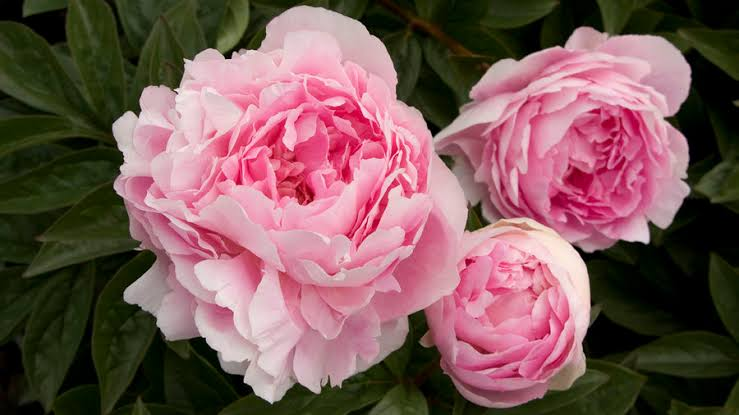 Floriculture Business In India 20