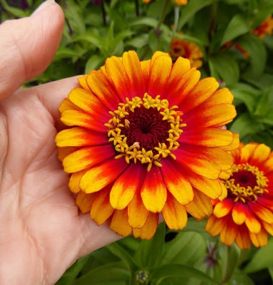 Floriculture Business In India 8